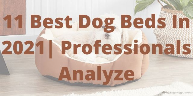 11 Best Dog Beds In 2021 Professionals Analyze