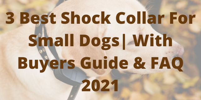 3 Best Shock Collar For Small Dogs  With Buyers Guide & FAQ 2021