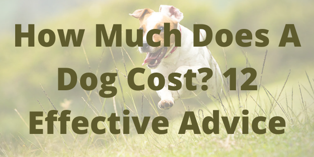 How Much Does A Dog Cost? 12 Effective Advice
