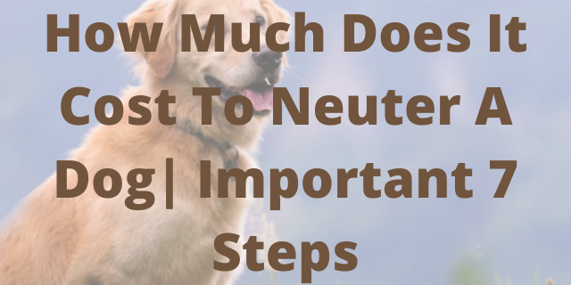 How Much Does It Cost To Neuter A Dog  Important 7 Steps