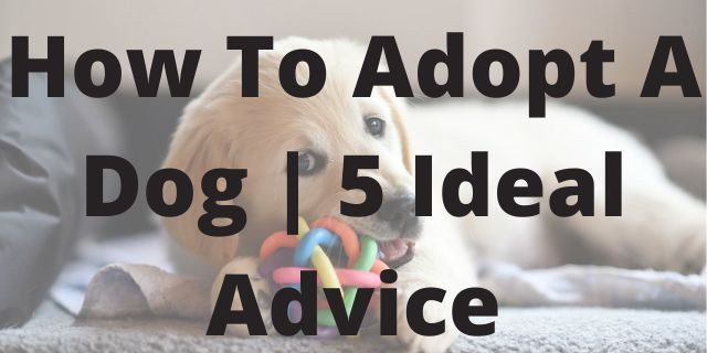 How To Adopt A Dog   5 Ideal Advice