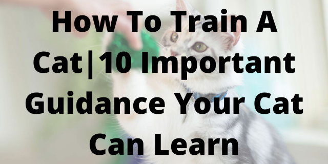 How To Train A Cat 10 Important Guidance Your Cat Can Learn