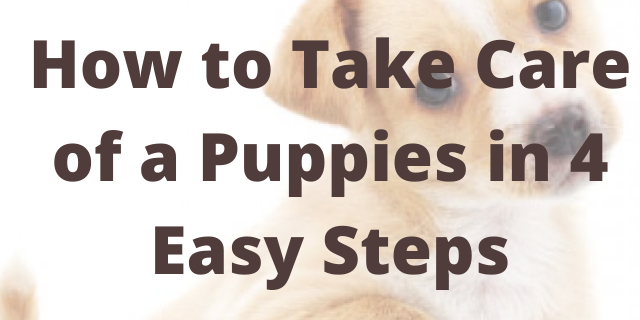 How to Take Care of a Puppies in 4 Easy Steps