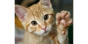 If Disciplining Your Cat Doesn't Work, Here Are Some More Suggestions