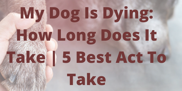 My Dog Is Dying: How Long Does It Take | 5 Best Act To Take