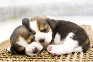 How to Take Care of a Puppies