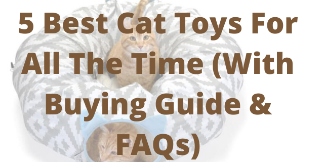 5 Best Cat Toys For All The Time (With Buying Guide & FAQs)