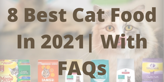 8 Best Cat Food In 2021 With FAQs