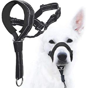 Best Dog Training Collars