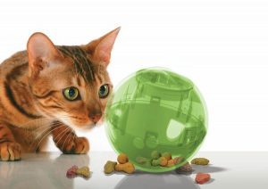 Best Cat Toys-SlimCat Interactive Toy and Food Dispenser by PetSafe