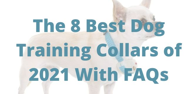 The 8 Best Dog Training Collars of 2021 With FAQs