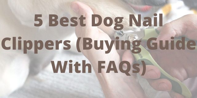 5 Best Dog Nail Clippers (Buying Guide With FAQs)