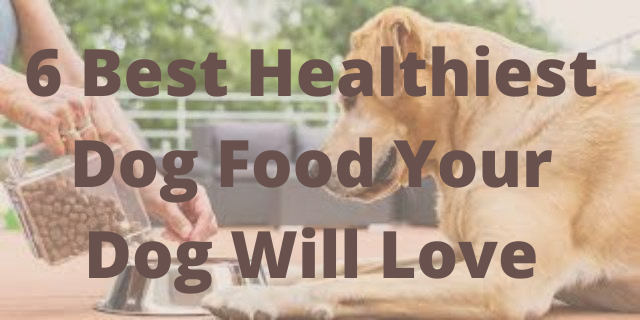 6 Best Healthiest Dog Food Your dog will love