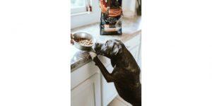 How Dog Food Is Made? 5 Best Handy Ways-How Do Dog Lovers Make Dog Food