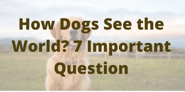 How Dogs See the World? 7 Important Question