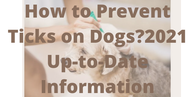 How to Prevent Ticks on Dogs?2021 Up-to-Date Information