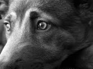 How Dogs See the World?Is my dog's vision limited to black and white