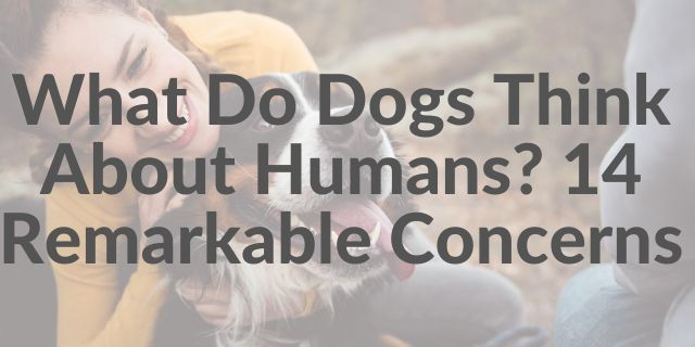 What Do Dogs Think About Humans