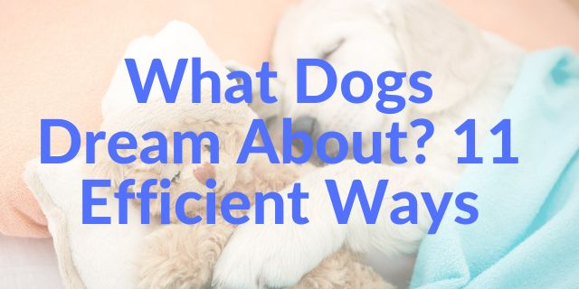 What Dogs Dream About 11 Efficient Ways
