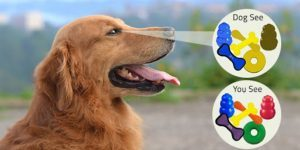 What_shades can_a_dog_perceive