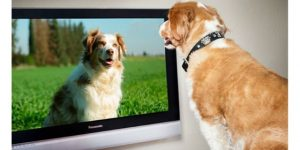 When dogs watch television, what do they see
