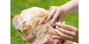 protect your dog against ticks by following the 4 steps mentioned below
