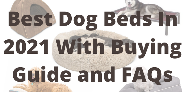 Best Dog Beds In 2021 With Buying Guide and FAQs