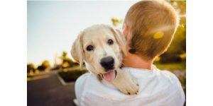 How To Convince Parents For Dog?Take responsibility and show them a pet dog will not be a burden to them