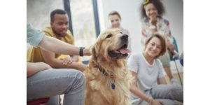 How To Convince Parents For Dog?Tell your parents dogs are great social companions