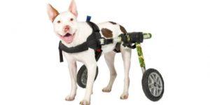 Best Dog Wheelchair-Walkin' Wheels Dog Wheelchair